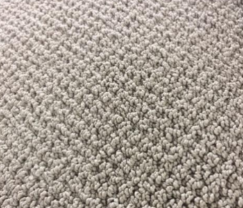 Berber Shaw – Great Ambition – Prairie    $13.99 / sq yd.  ( $1.55 / sq. ft. )   -  In Stock